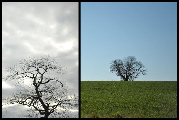 Correspondances-arbre